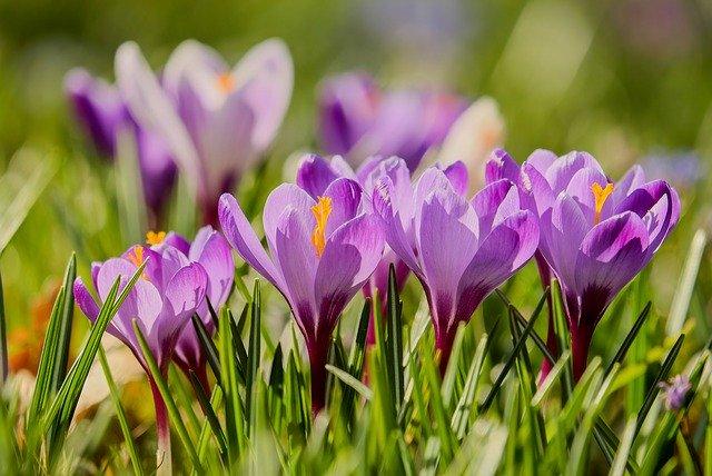 projektowanie ogrodów wiosną konin