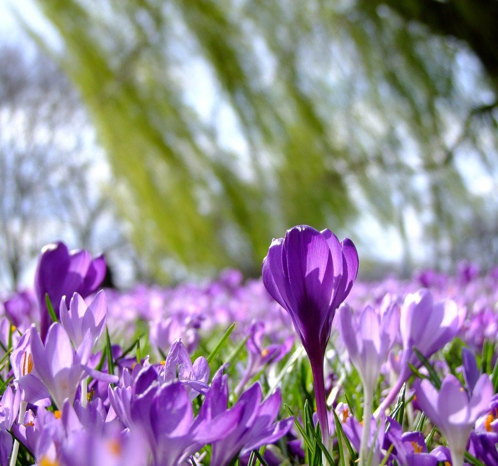 Wiosna w ogrodzie…