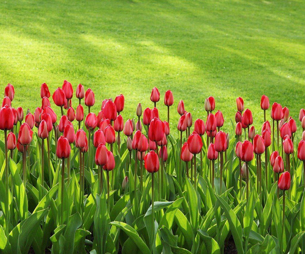 Trawnik w domowym ogrodzie